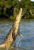REP 11 GL0004 01