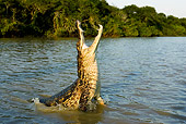 REP 11 GL0005 01