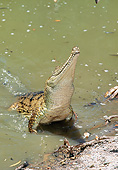 REP 11 GL0009 01