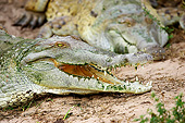 REP 11 GL0010 01