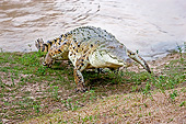 REP 11 GL0011 01