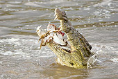 REP 11 MC0001 01
