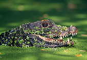 REP 11 MH0001 01