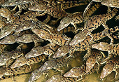 REP 11 MH0007 01