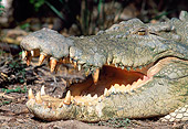 REP 11 MH0011 01