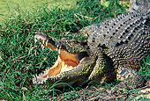 REP 11 MH0012 01