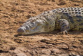 REP 11 RW0002 01