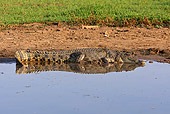 REP 11 WF0002 01
