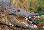 REP 11 TL0001 01