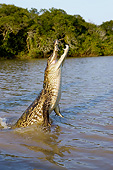 REP 12 GL0003 01