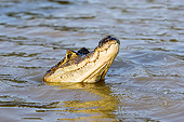 REP 12 GL0004 01