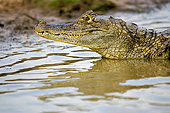 REP 12 GL0005 01
