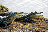REP 12 GL0008 01