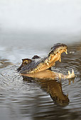 REP 12 JE0001 01