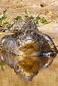 REP 12 MC0003 01