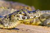REP 12 MC0004 01