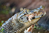 REP 12 MC0005 01