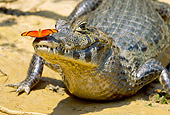 REP 12 MC0006 01
