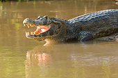 REP 12 MC0007 01