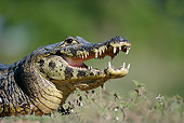 REP 12 WF0001 01