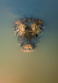 REP 12 WF0003 01