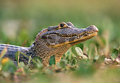REP 12 WF0005 01