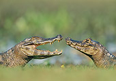 REP 12 WF0007 01