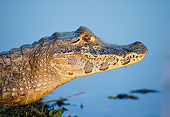 REP 12 KH0001 01