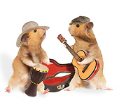 ROD 01 JE0003 01