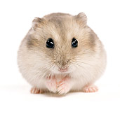 ROD 01 JE0007 01