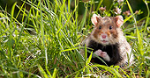 ROD 01 KH0028 01