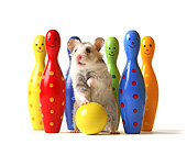 ROD 01 XA0003 01