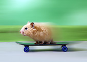 ROD 01 XA0004 01