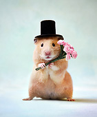 ROD 01 XA0008 01