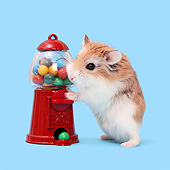 ROD 01 XA0012 01