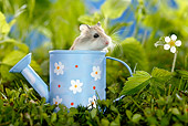 ROD 01 KH0002 01