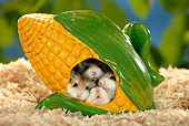 ROD 01 KH0007 01