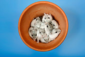 ROD 01 KH0010 01