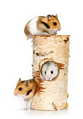 ROD 01 KH0011 01