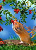 ROD 01 KH0012 01