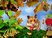 ROD 01 KH0013 01