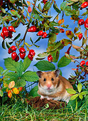 ROD 01 KH0019 01