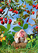 ROD 01 KH0020 01