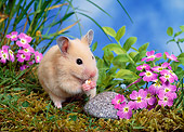 ROD 01 KH0025 01
