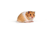 ROD 01 RK0001 01