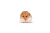 ROD 01 RK0002 02
