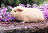 ROD 02 GR0002 01