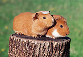 ROD 02 GR0012 01