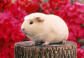 ROD 02 GR0013 01