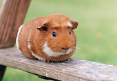 ROD 02 GR0022 01